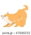 柴犬 犬 親子のイラスト 47688232