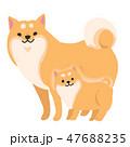 柴犬 犬 親子のイラスト 47688235