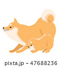柴犬 犬 親子のイラスト 47688236
