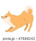 柴犬 犬 ポーズのイラスト 47688242