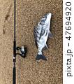 魚 釣り フィッシングの写真 47694920