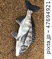 魚 釣り 魚類の写真 47694921