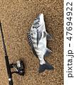 魚 釣り 魚類の写真 47694922