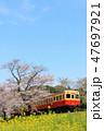 春 桜 電車の写真 47697921