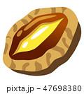 鮑 貝 貝類のイラスト 47698380