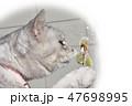 ネコニャンニャンとニャンコ、猫柳と猫 47698995