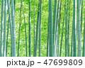 竹 竹林 竹藪の写真 47699809