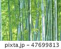 竹 竹林 竹藪の写真 47699813