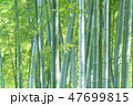 竹 竹林 竹藪の写真 47699815