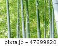 竹 竹林 竹藪の写真 47699820