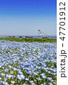 花畑 ネモフィラ みはらしの丘の写真 47701912