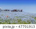 花畑 ネモフィラ みはらしの丘の写真 47701913