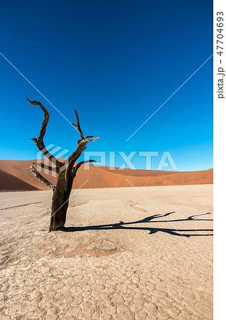 ナミビア ナミブ砂漠 死の沼 デッドフレイ 47704693