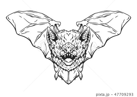 Vampire bat in flight. 47709293