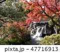 府中の森公園の紅葉 47716913
