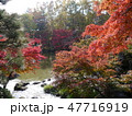 府中の森公園の紅葉 47716919