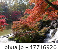 府中の森公園の紅葉 47716920