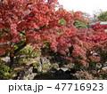 府中の森公園の紅葉 47716923