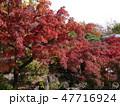 府中の森公園の紅葉 47716924