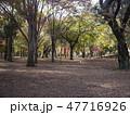 府中の森公園 雑木林 47716926