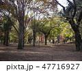府中の森公園 雑木林 47716927