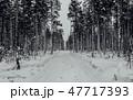 樹木 樹 ツリーの写真 47717393