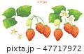 苺 フルーツ 果物のイラスト 47717972