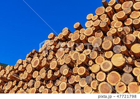 静岡県伊豆市 材木置き場 林業イメージ 47721798