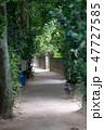 フクギ並木 並木道 夏の写真 47727585
