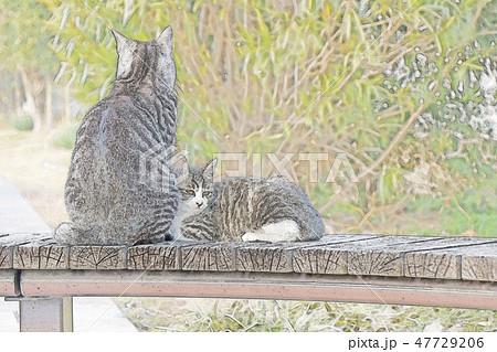 猫の親子のイラスト 47729206
