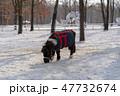 冬の牧場 馬 47732674