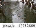 冬の鴨々川 札幌 47732869