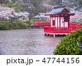 茂原公園 桜 雨の写真 47744156