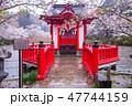 茂原公園 桜 染井吉野の写真 47744159