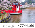 茂原公園 桜 雨の写真 47744160