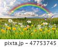 花 タンポポ 野原の写真 47753745