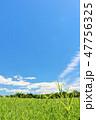 青空 夏 草原の写真 47756325