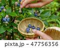 ブルーベリー 果物 果実の写真 47756356