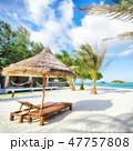 ビーチ 海 椰子の木の写真 47757808