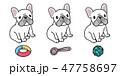 わんこ 犬 ベクトルのイラスト 47758697