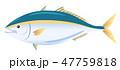 魚 青魚 海水魚のイラスト 47759818