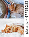 Fluffy cat before and after adoption in home.  47763283