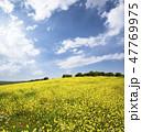 花 黄色い 黄の写真 47769975