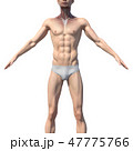 47775766