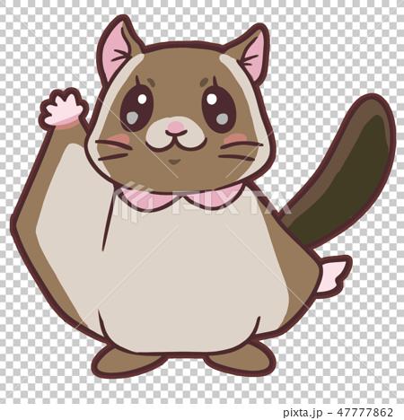 かわいいムササビ1 cute flying squirrel1 47777862