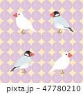 文鳥 かわいい 小鳥のイラスト 47780210