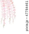 しだれ桜 花 桜のイラスト 47784461