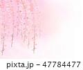 しだれ桜 花 桜のイラスト 47784477