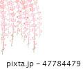 しだれ桜 花 桜のイラスト 47784479