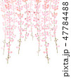 しだれ桜 花 桜のイラスト 47784488
